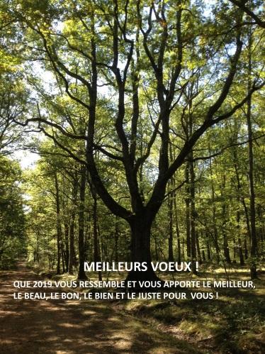 2019 Voeux Olivia de Raucourt