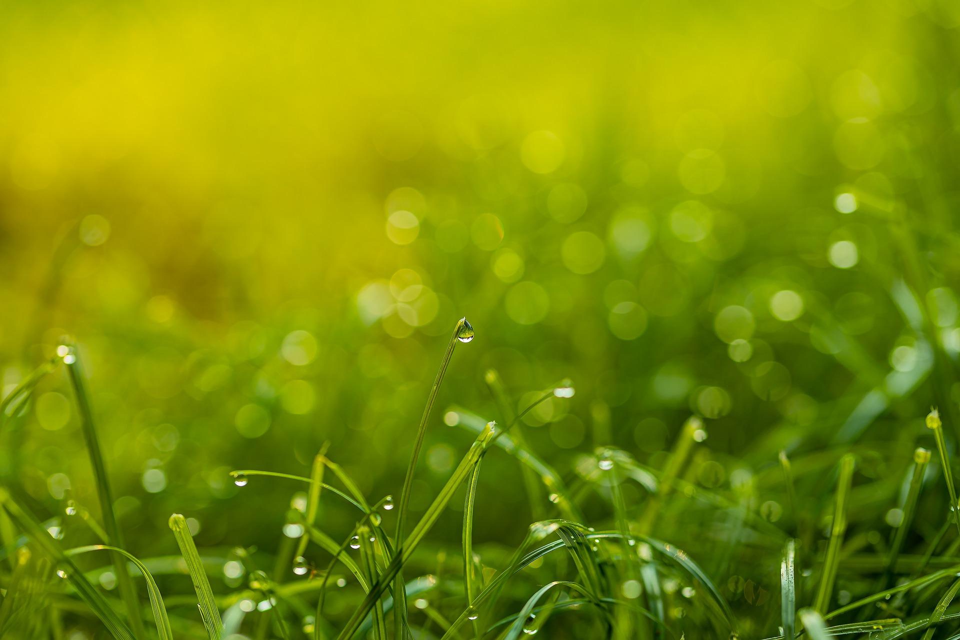 grass 4433605 1920